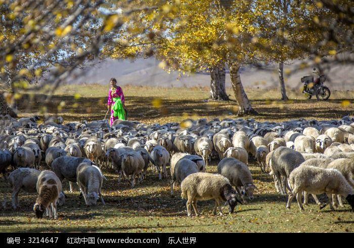 原创摄影图 动物植物 家禽家畜 秋天的羊群