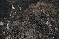 太行山冬天里的树