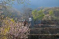 大山里的春天