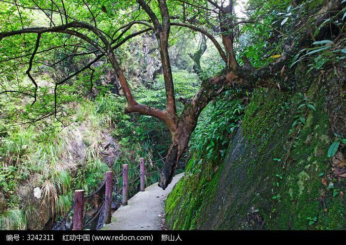 三溪峡谷生长在岩壁上的树木图片,高清大图_峡谷瀑布