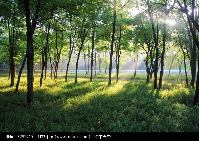 阳光下的槐林图片,高清大图_树木枝叶素材