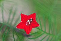一只小昆虫在花朵上采花粉