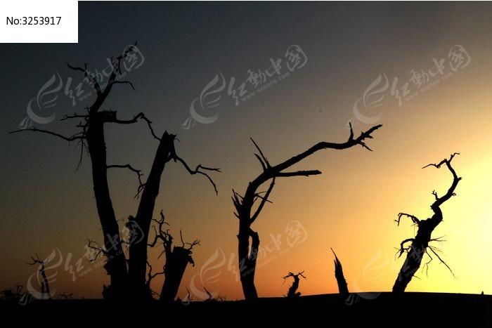 黄昏里怪树的剪影图片,高清大图_森林树林素材