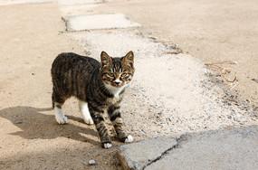 看镜头的一只小猫