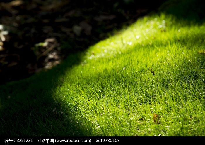 原创摄影图 动物植物 花卉花草 小草  请您分享: 红动网提供花卉花草