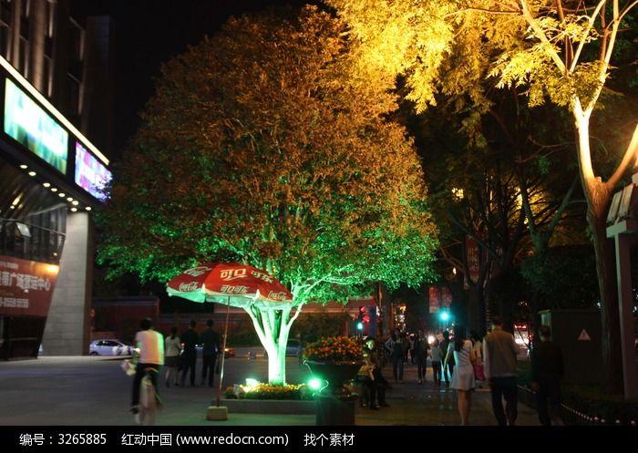 广场上的树图片,高清大图_树木枝叶素材