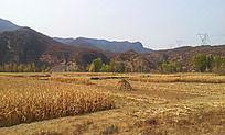 金色的田野