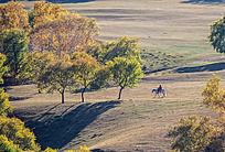 一批马和秋天的树