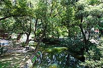 婺源晓起村的水口园林的自然景色