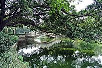 碧绿的湖水一角风景
