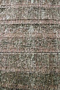 大树木上细细的纹理