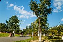 公园里的树木蓝天白云