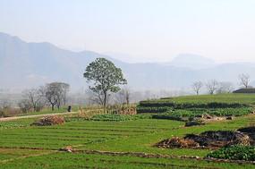 绿色的乡村田野