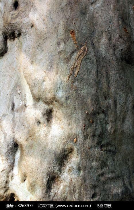柠檬桉树表面高清图片下载 编号3268975 红动网