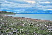青海湖边布满砾石的草地