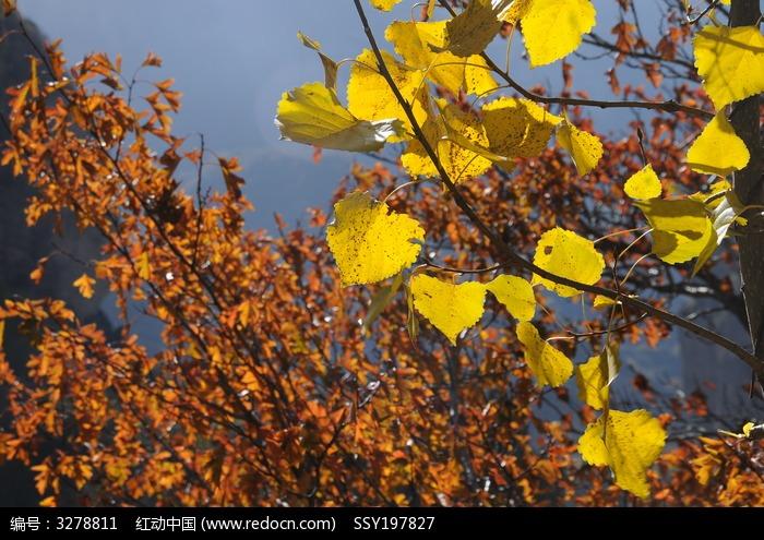 秋天的叶子图片,高清大图