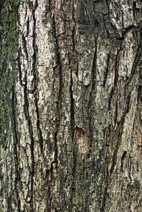 树木表面之树纹图