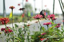 小花上的花蝴蝶