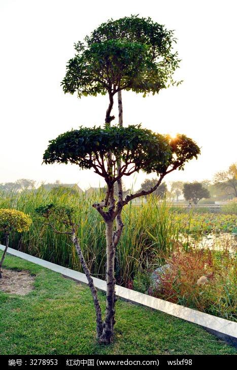 园林灌木图片,高清大图