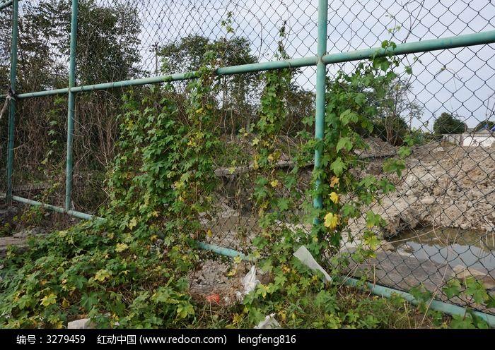 植物网格架图片