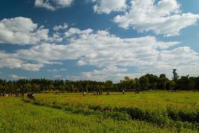 壮美云彩下的花丛