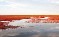 黄河入海口湿地红地毯风光