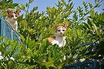 两只可爱的躲在树丛里的猫