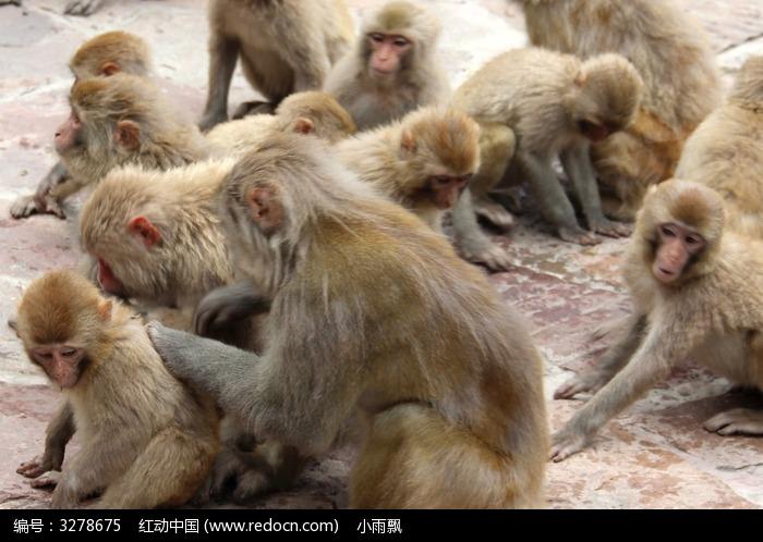 群猴图片,高清大图_陆地动物素材