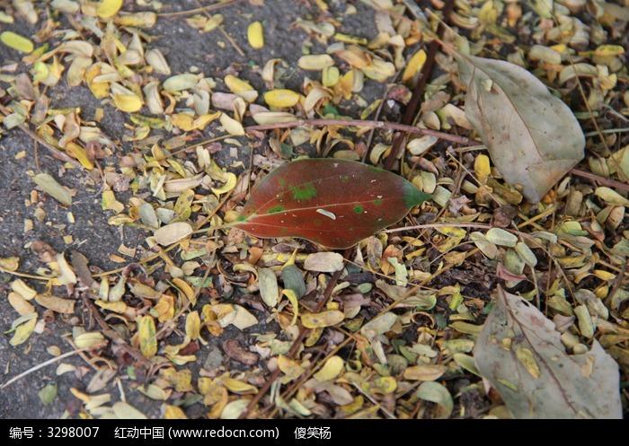 秋天落叶动物动态图片