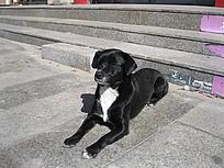 爬着的黑色小狗