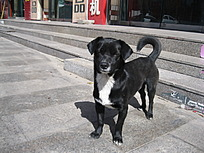 站在台阶前的小黑狗