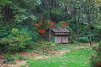 树林中的木房子