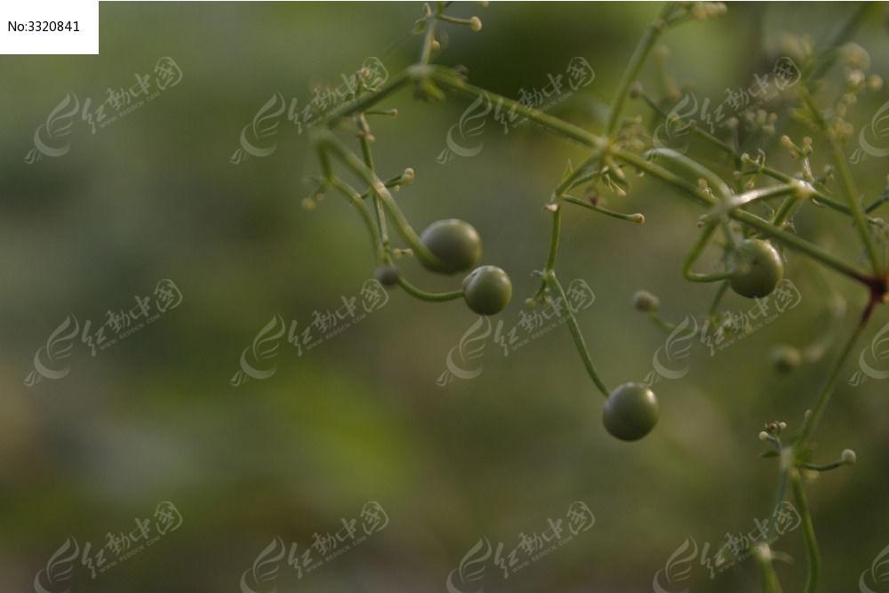 原创摄影图 动物植物 花卉花草 果实_mg_8212  请您分享: 红动网提供