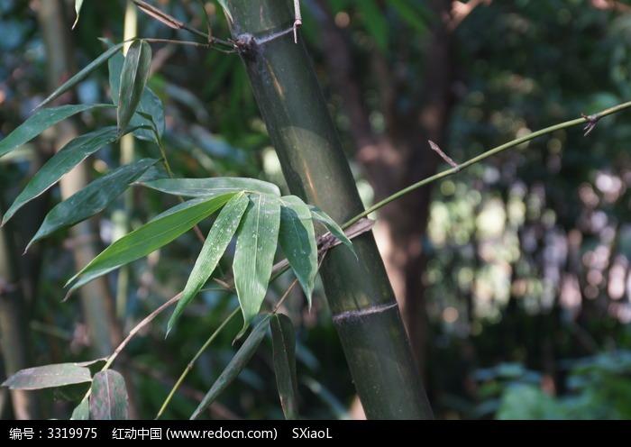 原创摄影图 动物植物 花卉花草 竹子  请您分享: 红动网提供花卉花草