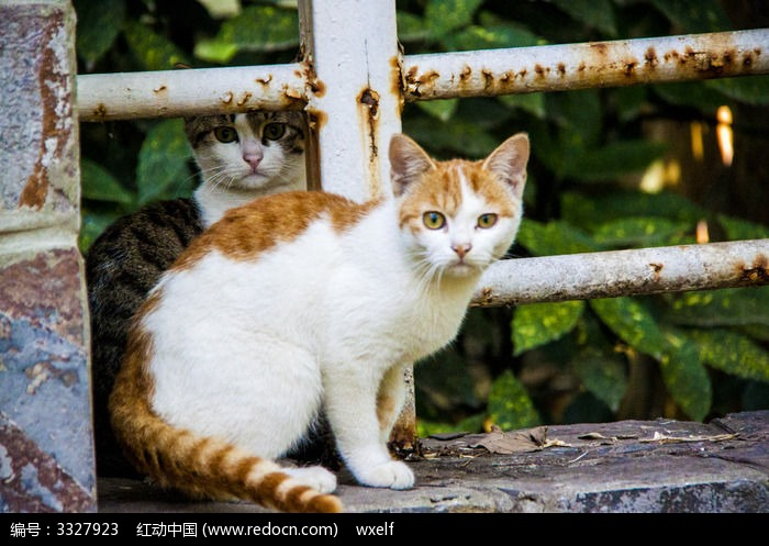 两只猫 一直黑猫和一只黄猫图片