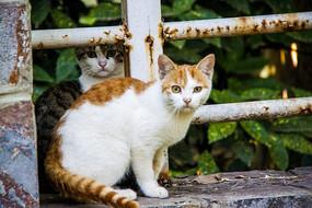 两只猫 一直黑猫和一只黄猫