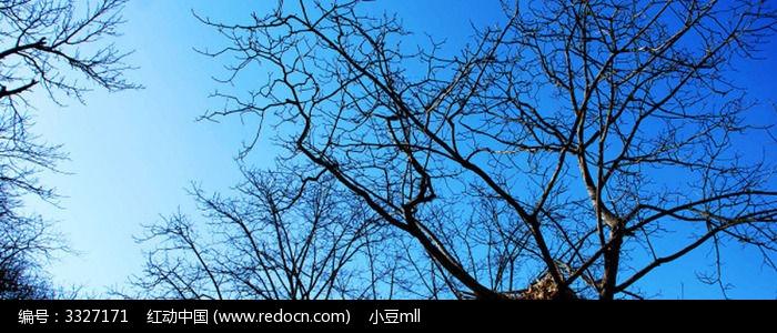 秋天枯树蓝天
