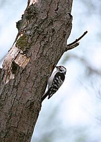 停在树杆上的小鸟