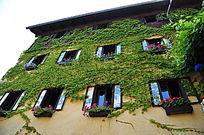 植物攀爬的房屋
