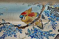 鸟类飞禽鹦鹉绚丽羽毛蓝色花朵
