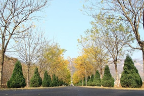 秋天的公路