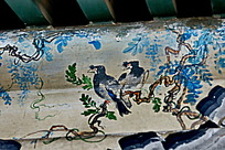 小鸟飞禽秃鹫树枝绿叶