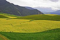 卓尔山下起伏的田野