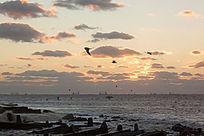 海上日出彩云海鸥飞翔