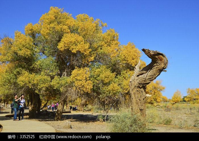枯木与胡杨树图片,高清大图_森林树林素材