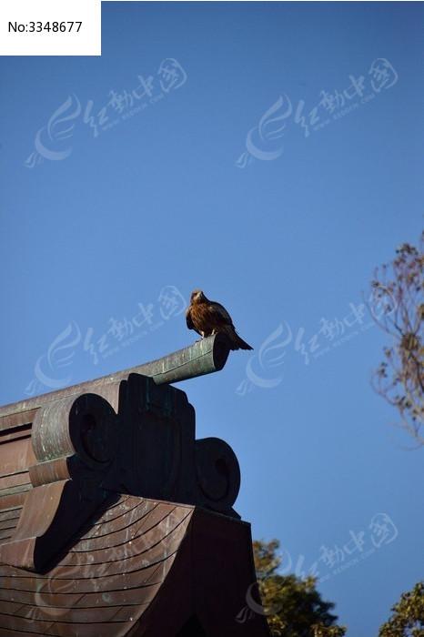 远望雄鹰图片,高清大图_空中动物素材