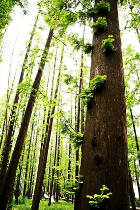 黄绿色树林中树干特写