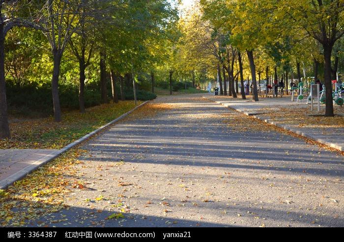 秋天的树图片,高清大图