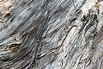 福州森林公园的树木表皮