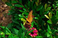 飞舞的黄蝴蝶